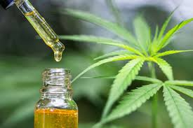 How To Make A Great CBD Oil Bulk Wholesale Purchase?