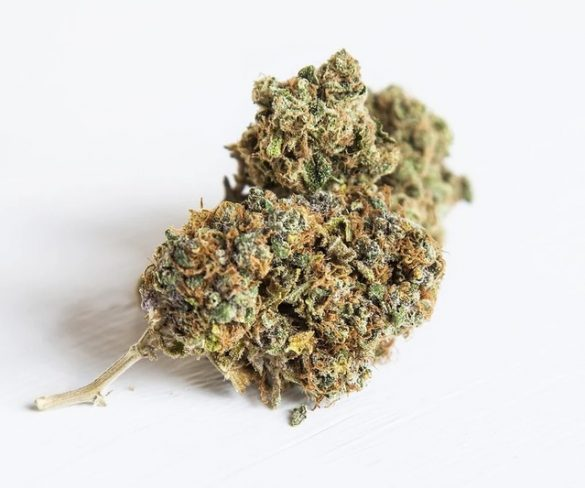 Top three sativa-dominant strains to try this summer